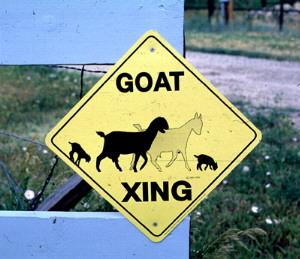 goatxing