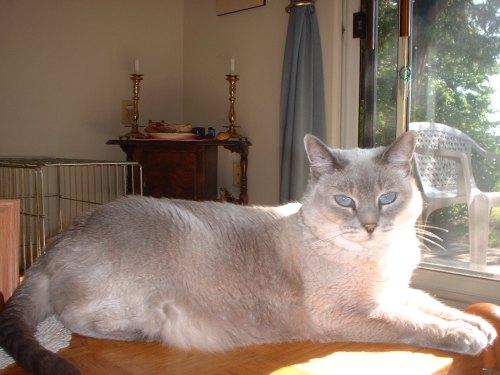 Coffeetable Cat