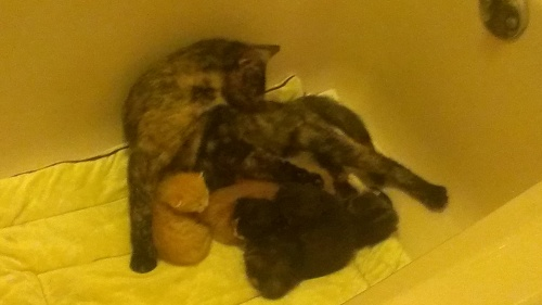 Mama Cat with four kittens
