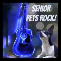 senior pets rock